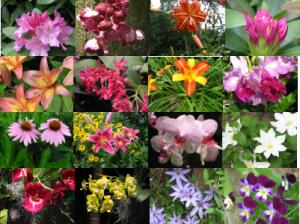 flowers-1-photos