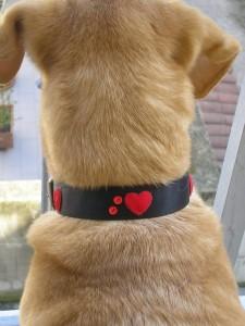 La foto del giorno: i collarini per cane di Baubando