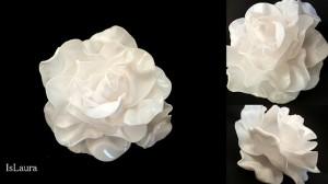 La foto del giorno: la rosa di Laura
