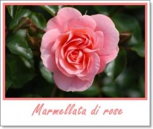 La Dispensa di Flabellina: marmellata di rose