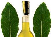 La Dispensa di Flabellina: Liquore di alloro