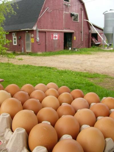 Consiglio del giorno: come riutilizzare i gusci delle uova