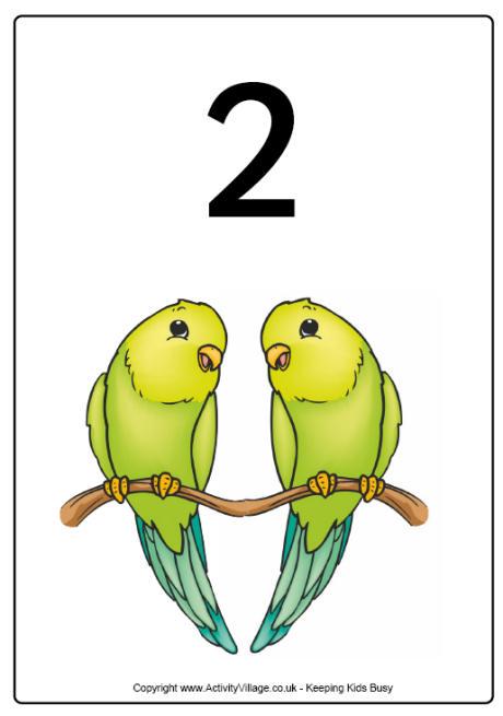 numeri e animali