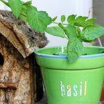 Come decorare i vasi per il terrazzo