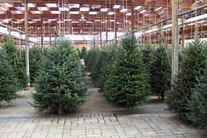 Addobbi di Natale eco-friendly