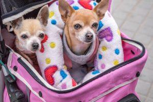 Come trasportare agevolmente il nostro cane, consigli per l'acquisto di un trasportino