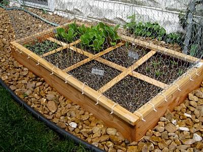 Come creare un orto nel proprio giardino for Creare un giardino semplice