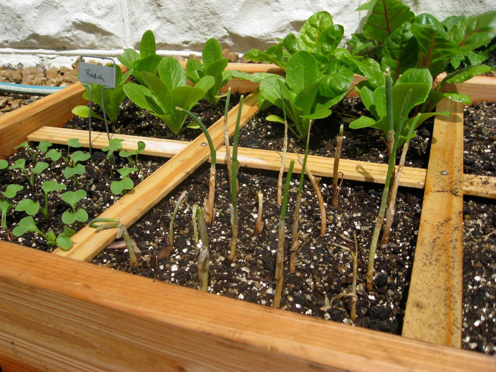 Come creare un orto nel proprio giardino - L orto in giardino ...