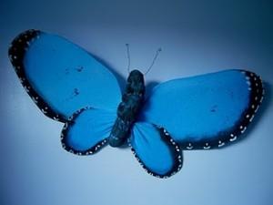 Farfalla di stoffa-http://marvelouslymessy.blogspot.com/2010/03/blue-morpho-butterfly-craft.html