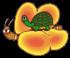 Iniziativa benefica:le farfalle si sono messe in testa di far volare le tartarughe